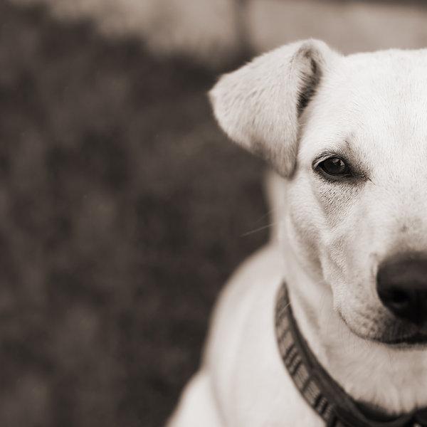 Cachorrada - parte 2 - FiFi