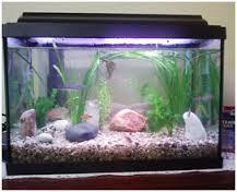 Drama do aquário, por Darci Men
